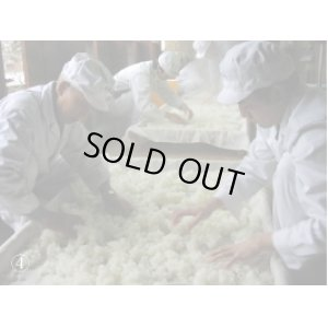 画像5: 越乃景虎 純米しぼりたてカメ詰め2018